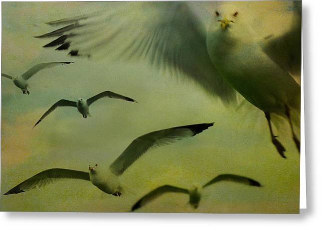 Flying Seagull Greeting Cards - Retro Seagulls Greeting Card by Gothicolors Donna Snyder