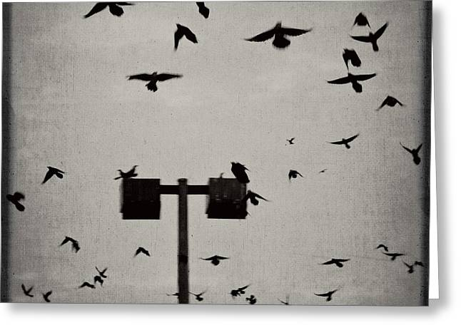 Revenge Of The Birds Greeting Card by Trish Mistric