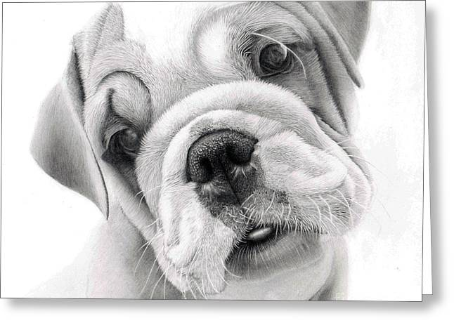 Puppies Drawings Greeting Cards - Rex a bulldog puppy Greeting Card by Alexandra Riley