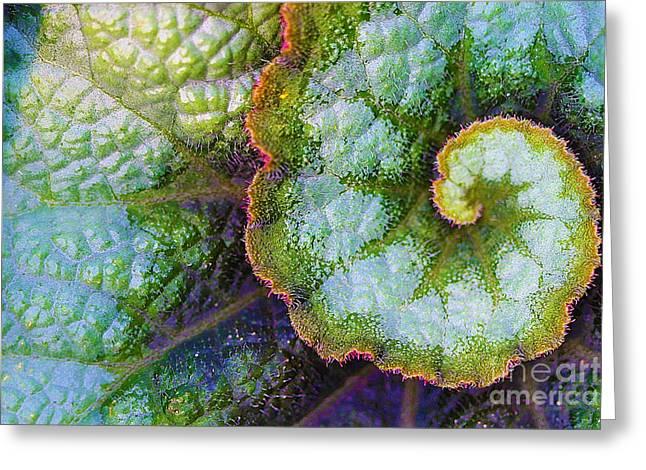 Foliage Fragrance Greeting Cards - Rex Begonia Leaf Greeting Card by Corey Ford