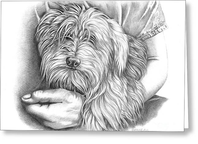 Toy Dog Drawings Greeting Cards - Rexie Greeting Card by Catherine Garneau