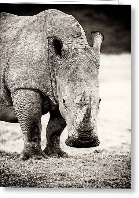 One Horned Rhino Greeting Cards - Rhino After The Rain Greeting Card by Mike Gaudaur