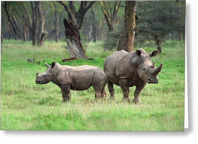 Danger Greeting Cards - Rhino Family Greeting Card by Sebastian Musial