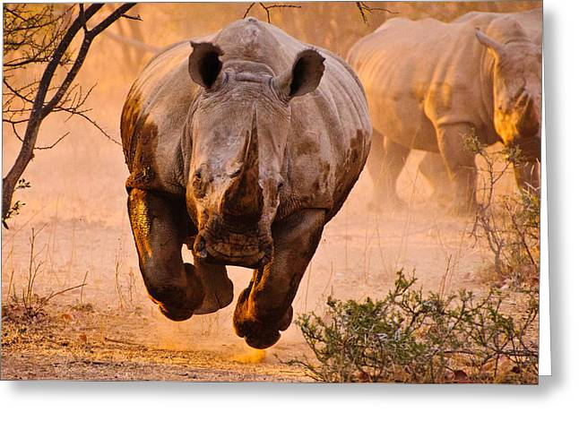 Rhinoceros Greeting Cards - Rhino Learning To Fly Greeting Card by Justus Vermaak