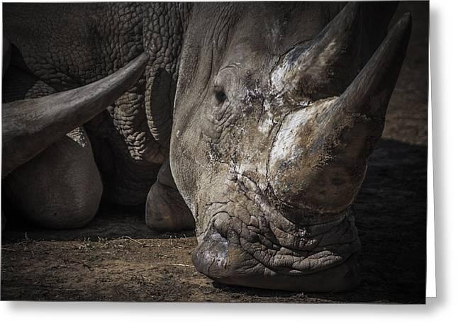 Rhinoceros Greeting Cards - Rhino portrait Greeting Card by Chris Fletcher