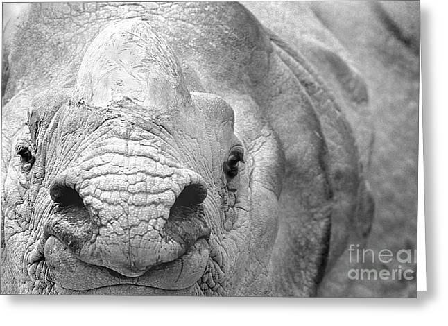 Rhinoceros Unicornis Greeting Cards - Rhinoceros 1 Greeting Card by Rich Killion
