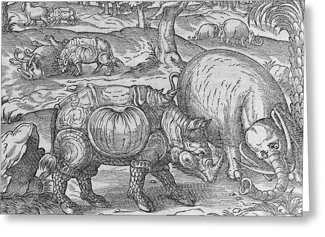 Rhinoceros Greeting Cards - Rhinoceros and elephant, 16th century Greeting Card by Science Photo Library