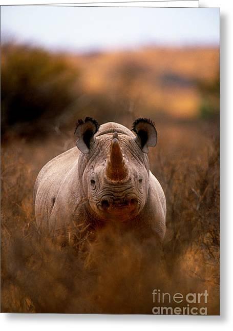 Rhinoceros Greeting Cards - Rhinoceros Greeting Card by Art Wolfe