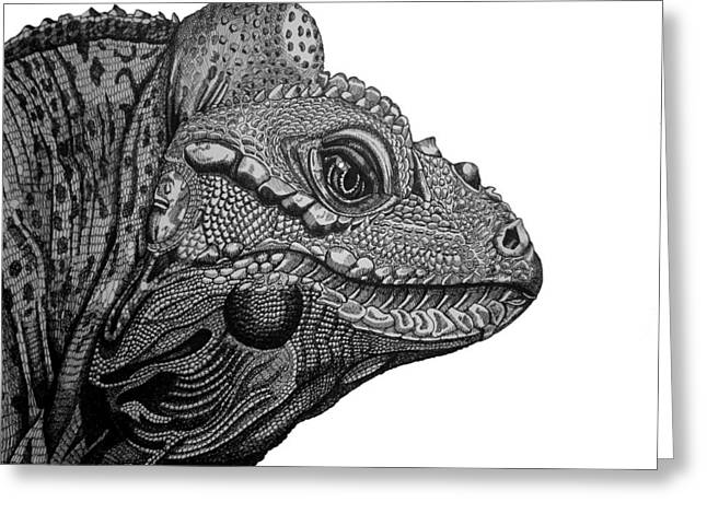 Rhinoceros Drawings Greeting Cards - Rhinoceros Iguana Greeting Card by Tracey Gurr BA Hons