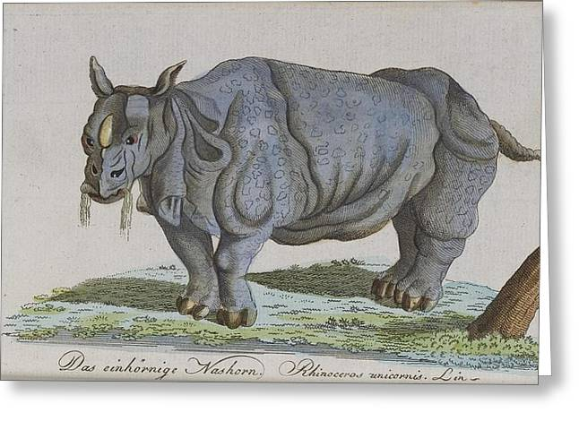 Rhinoceros Paintings Greeting Cards - Rhinoceros Greeting Card by Celestial Images
