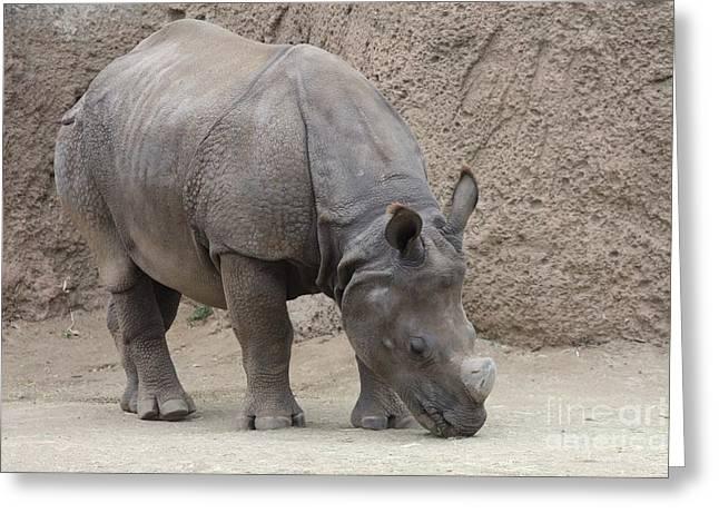 Rhinoceros Greeting Cards - Rhinoceros Greeting Card by John Telfer
