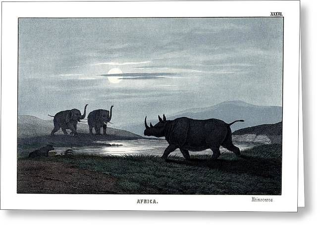 Rhinoceros Drawings Greeting Cards - Rhinoceros Greeting Card by Splendid Art Prints