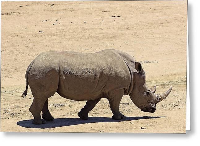 Rhinoceros Greeting Cards - Rhinoceros Greeting Card by Viktor Savchenko