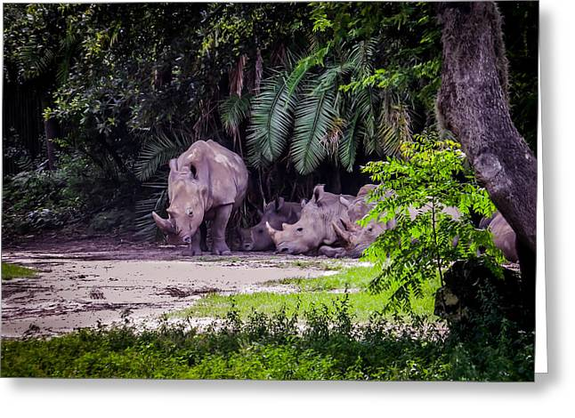 Mammals Greeting Cards - Rhinoceros Greeting Card by Zina Stromberg