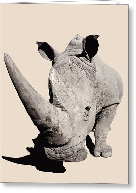 One Horned Rhino Greeting Cards - Rhinocerosafrica Greeting Card by Thomas Kitchin & Victoria Hurst