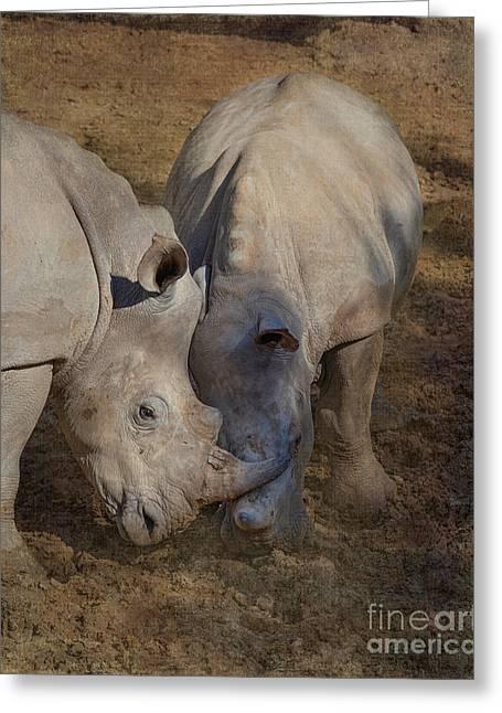 Tn Greeting Cards - Rhinos at play Greeting Card by TN Fairey