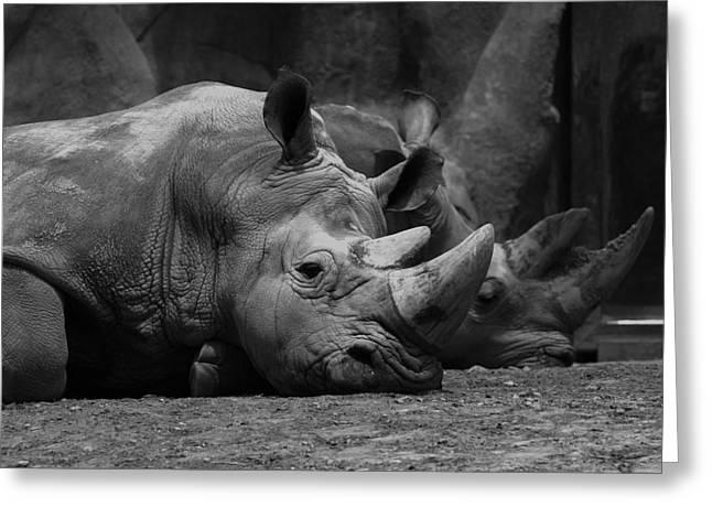 Grey Scale Greeting Cards - Rhinos Greeting Card by David Andersen