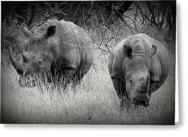 Recently Sold -  - Rhinoceros Greeting Cards - Rhinos Greeting Card by Ramona Johnston