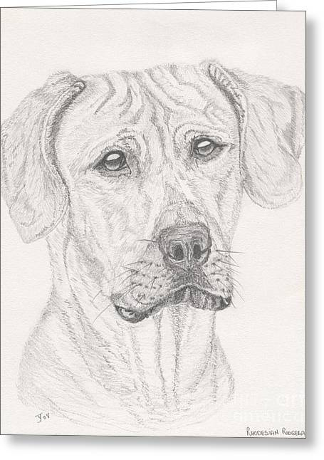 Zimbabwe Drawings Greeting Cards - Rhodesian Ridgeback Greeting Card by Yvonne Johnstone