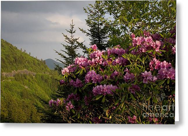 Jonathan Welch Greeting Cards - Rhododendron 1 Greeting Card by Jonathan Welch