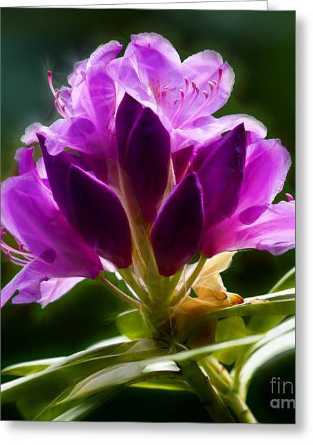 Rhododendrons Greeting Cards - Rhododendron Flower Greeting Card by Lutz Baar