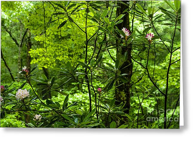 Rhododendron Maximum Greeting Cards - Rhododendron Forest Greeting Card by Thomas R Fletcher