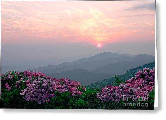 Featured Art Greeting Cards - Rhododendron Sunrise Greeting Card by Annlynn Ward