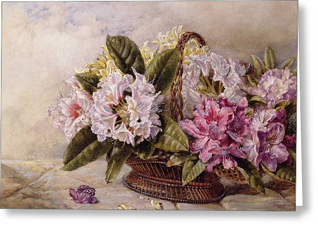 Weave Greeting Cards - Rhododendrons Wc On Paper Greeting Card by English School