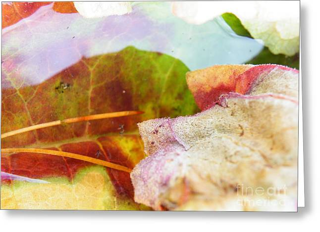 Locus Greeting Cards - Rhubarb leaf locus Greeting Card by Brian Boyle