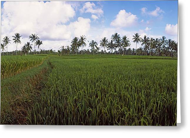 Paddy Greeting Cards - Rice Field, Bali, Indonesia Greeting Card by Panoramic Images