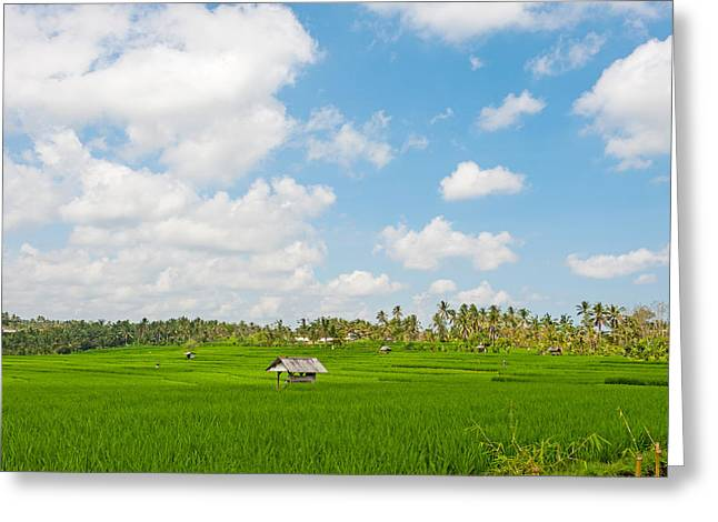 Field. Cloud Greeting Cards - Rice Field, Rejasa, Penebel, Bali Greeting Card by Panoramic Images
