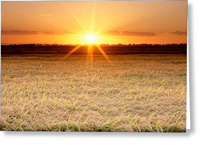 Tree Lines Greeting Cards - Rice Field, Sacramento Valley Greeting Card by Panoramic Images