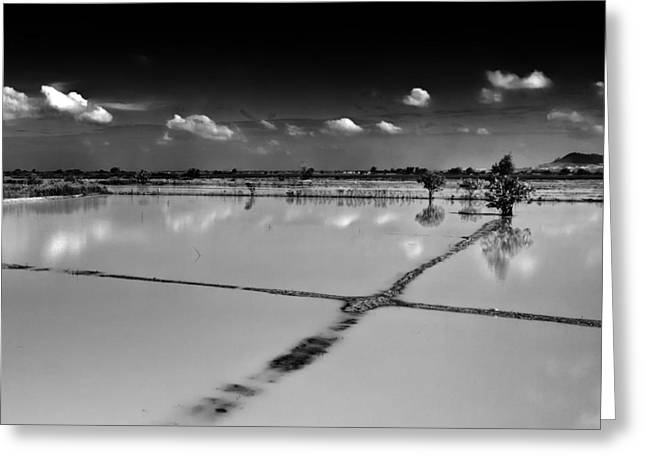Monochrome Greeting Cards - Rice Fields Cambodia Greeting Card by Stylianos Kleanthous