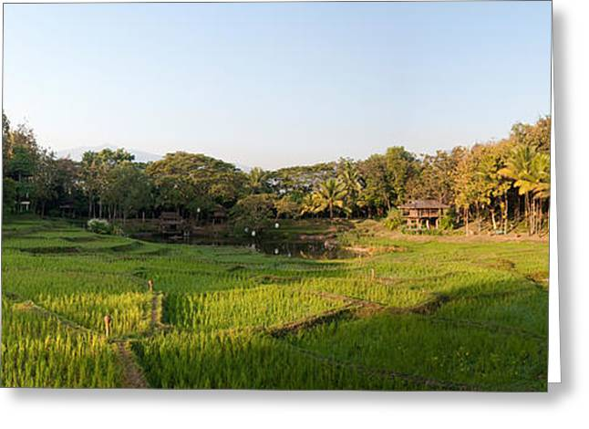 Chiang Greeting Cards - Rice Fields In Front Of Villas, Four Greeting Card by Panoramic Images