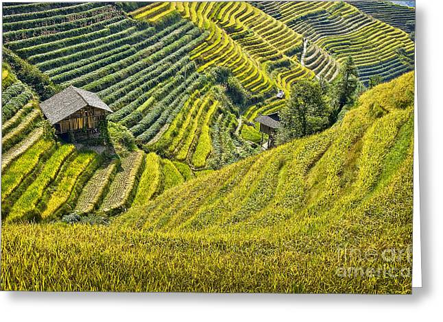 Beautiful Scenery Greeting Cards - Rice fields terraces Greeting Card by Delphimages Photo Creations