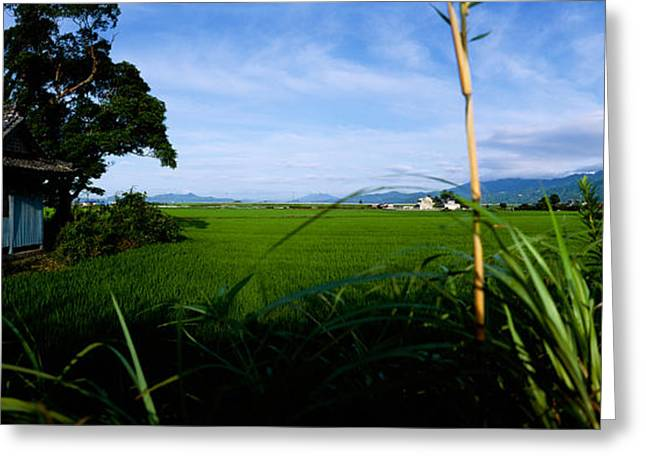 Rice Paddy Greeting Cards - Rice Paddies In A Field, Saga Greeting Card by Panoramic Images