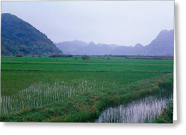 Rice Paddy Greeting Cards - Rice Paddies In A Fiele, Vietnam Greeting Card by Panoramic Images