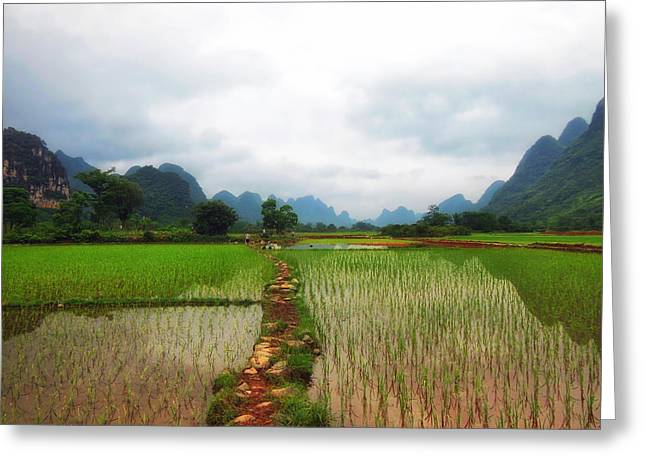 Rice Paddy Greeting Cards - Rice Paddies of China Greeting Card by Mountain Dreams