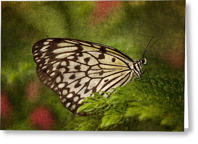 Rice Paper Greeting Cards - Rice Paper Butterfly 2 Greeting Card by Joann Vitali
