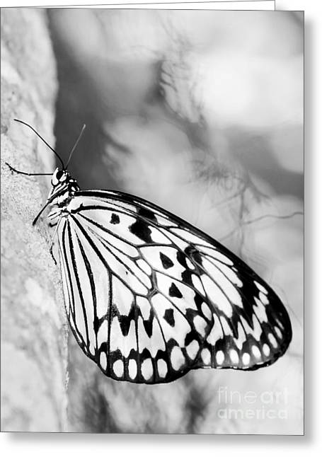 Rice Paper Greeting Cards - Rice Paper Butterfly Hanging On Greeting Card by Sabrina L Ryan
