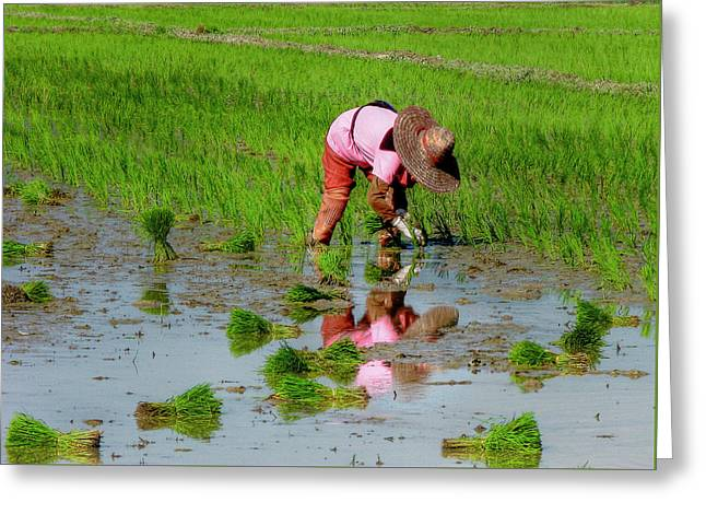 Wide Brim Hat Greeting Cards - Rice Planter Greeting Card by Douglas J Fisher