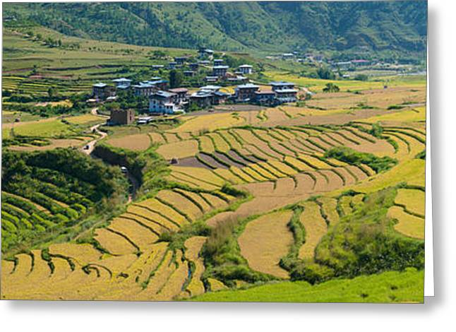 Rice Paddy Greeting Cards - Rice Terraced Fields And Houses Greeting Card by Panoramic Images