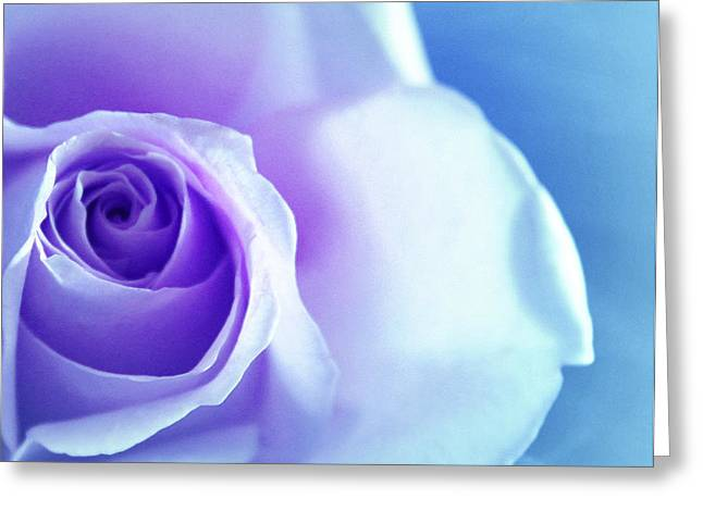 Rose Portrait Greeting Cards - Rich in Glory Greeting Card by  The Art Of Marilyn Ridoutt-Greene
