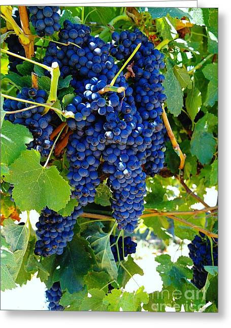 Purple Grapes Greeting Cards - Rich On The Vine   Greeting Card by Jeff  Swan
