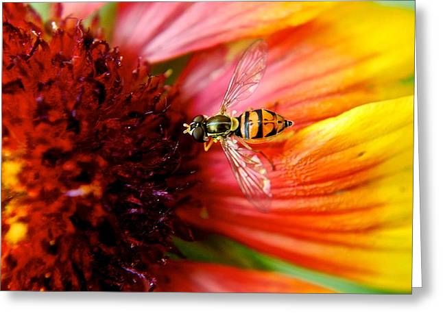 Stinger Greeting Cards - Rich Reward Greeting Card by Frozen in Time Fine Art Photography