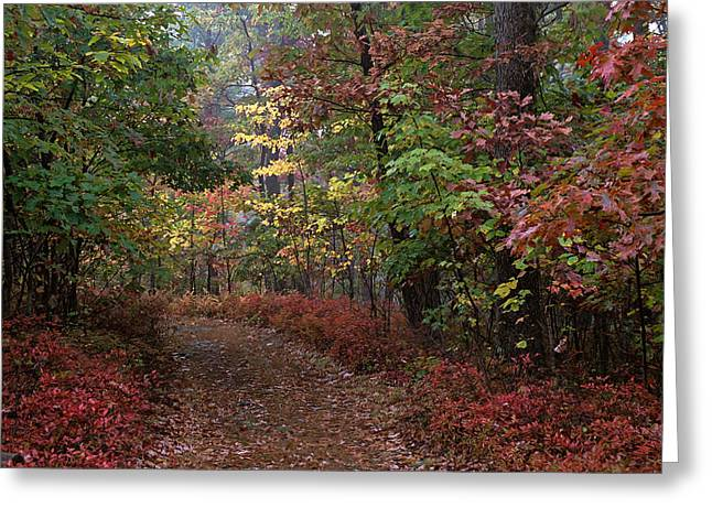 Lush Green Digital Greeting Cards - Ricketts Glen 2080 Greeting Card by Scott McAllister