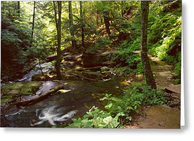Lush Green Digital Greeting Cards - Ricketts Glen trail 001 Greeting Card by Scott McAllister