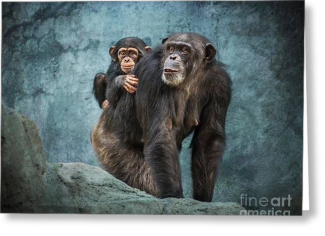 Chimpanzee Greeting Cards - Ride Along Greeting Card by Jamie Pham