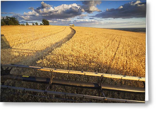 Winter Wheat Greeting Cards - Ride Along Greeting Card by Mark Kiver