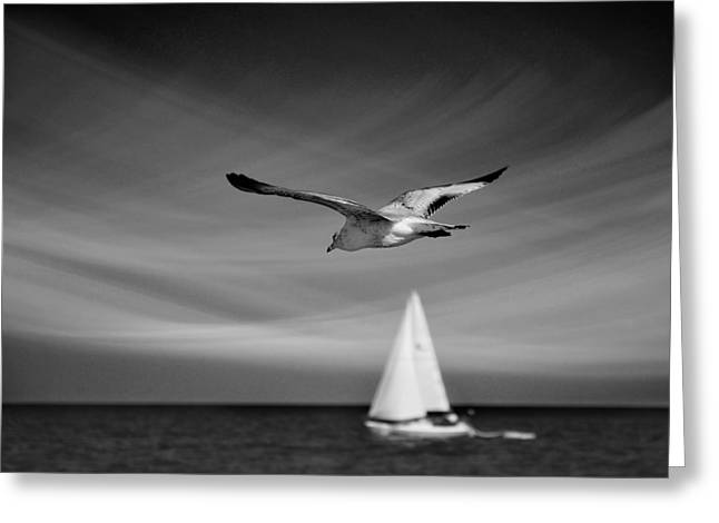 Sailboat Photos Greeting Cards - Ride The Wind Greeting Card by Laura  Fasulo